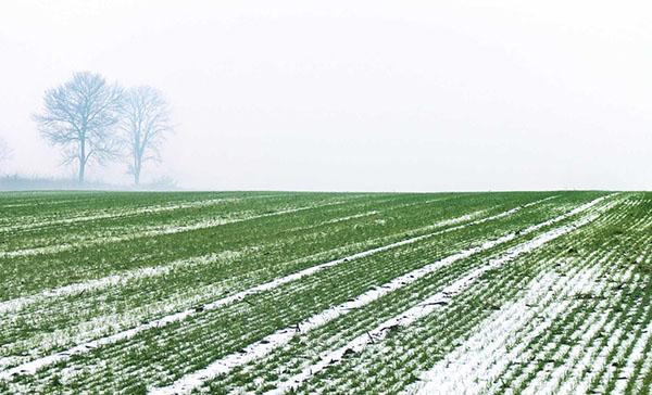 winterwheatmeet.jpg