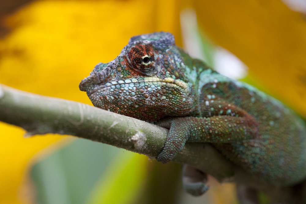Court Whelan - _MG_0922.jpg