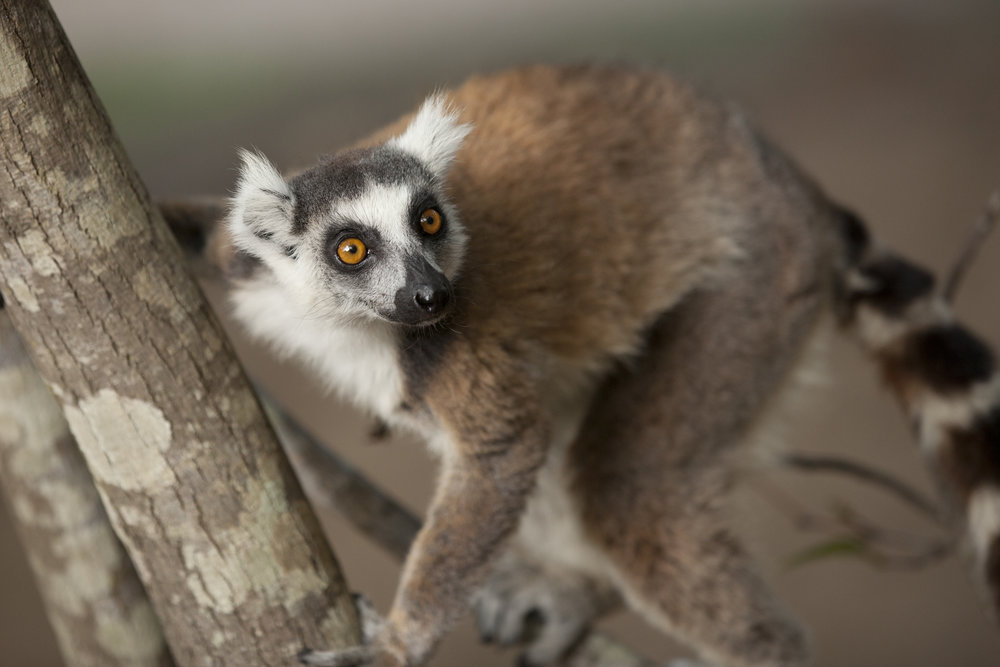 Court Whelan - _MG_3543.jpg