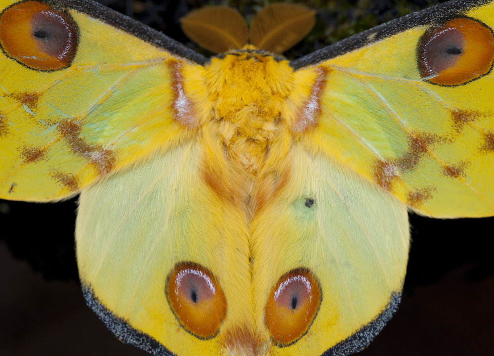 Court Whelan - _MG_2331.jpg