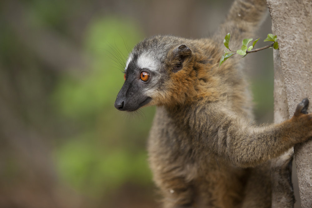 Court Whelan - _MG_3524.jpg