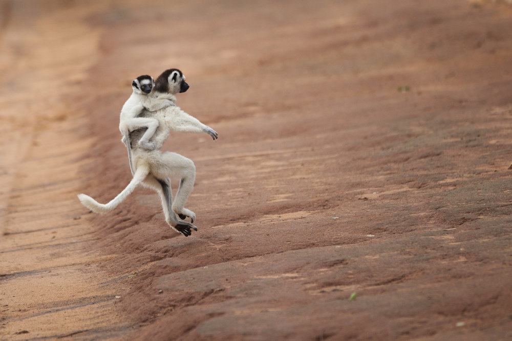 Court Whelan - _MG_4511.jpg