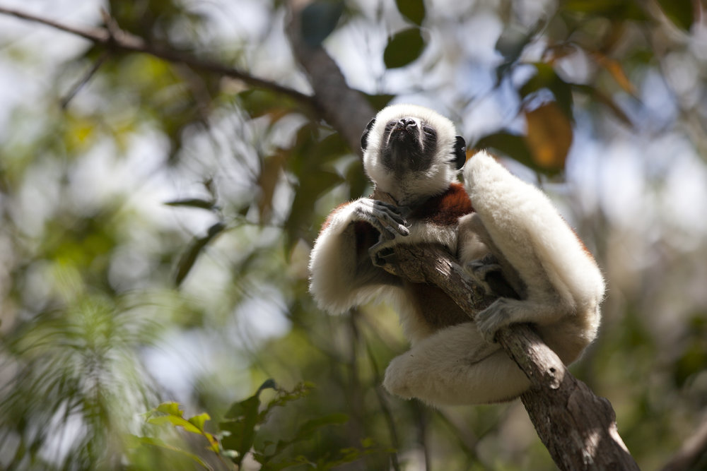 Court Whelan - Animal.jpg