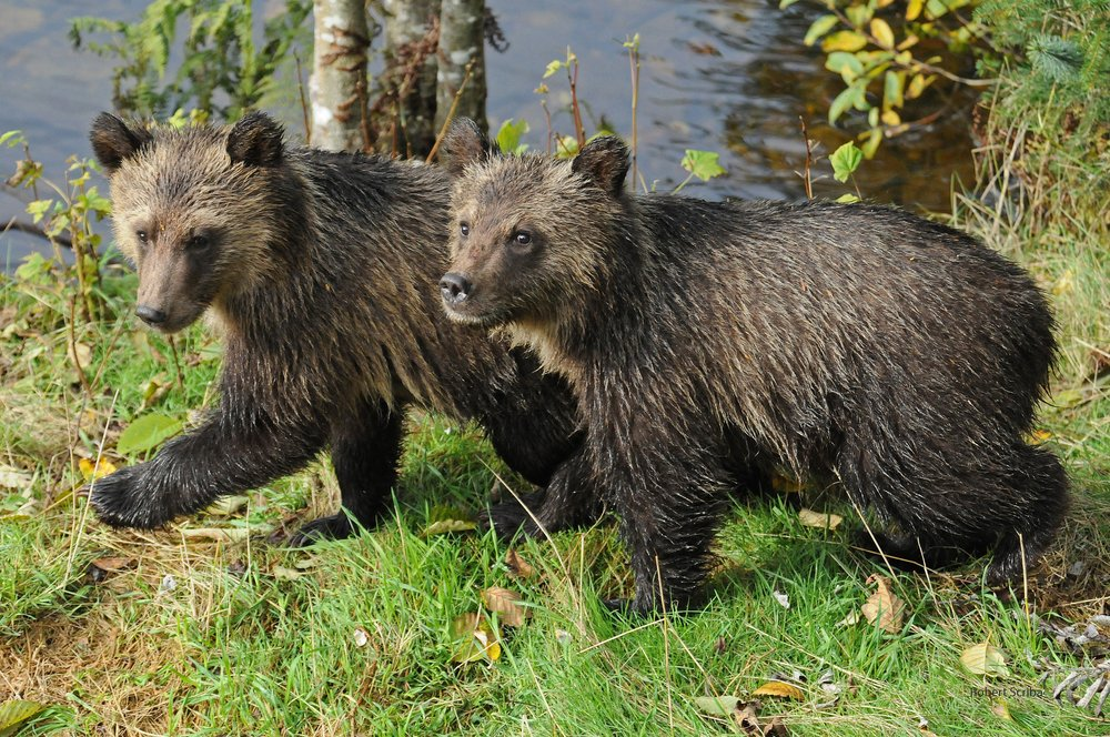 037 Grizzly Siblings_watermark_jpeg.jpg