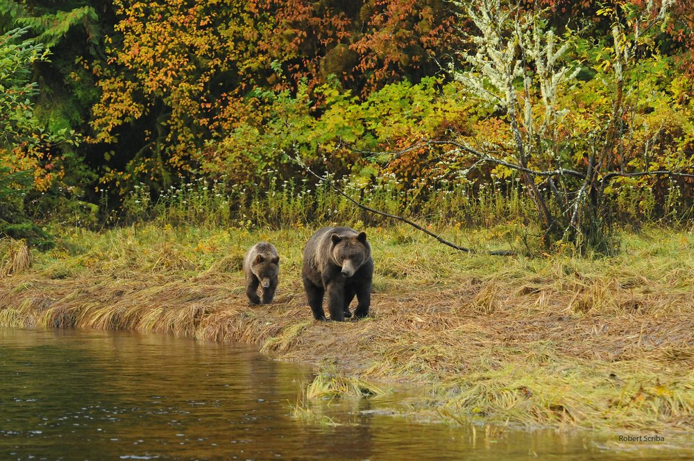13 Autumn Grizzlies_watermark_jpeg.jpg