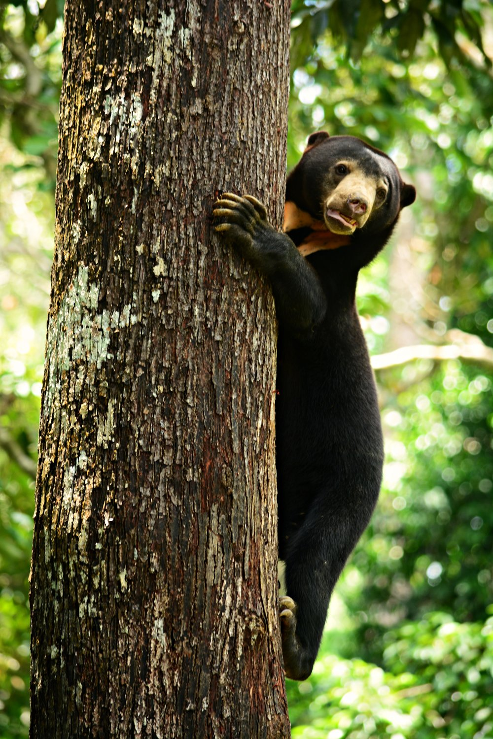 Bornean Sun Bear Conservation Centre -