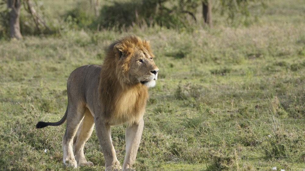 Randy Mazzuca - Lions- WCN (1).JPG