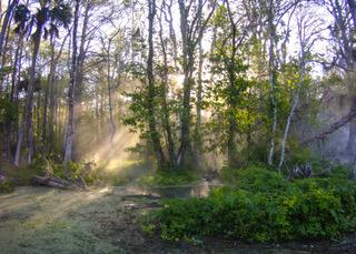 MICR0 Silver river fog 015.jpeg