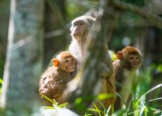 Monkeys 9976.jpeg