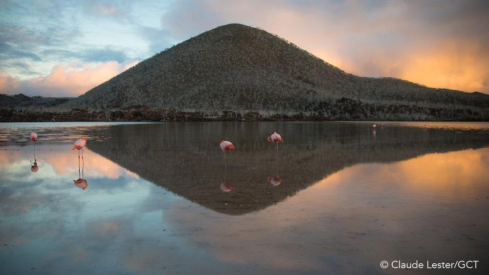 Galapagos Conservation Trust  - Majestic - Ivan Dario Vasquez.jpg