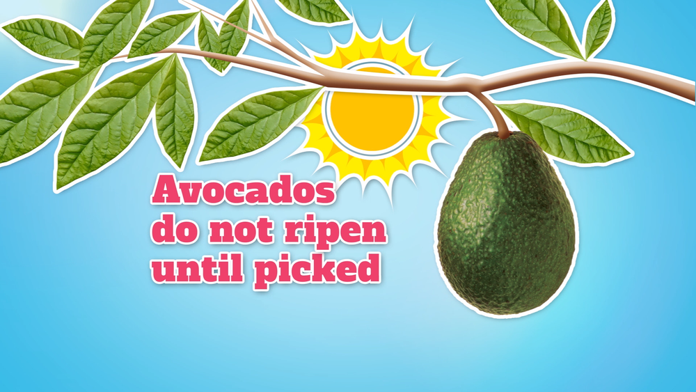 NZ Avocados 4.png