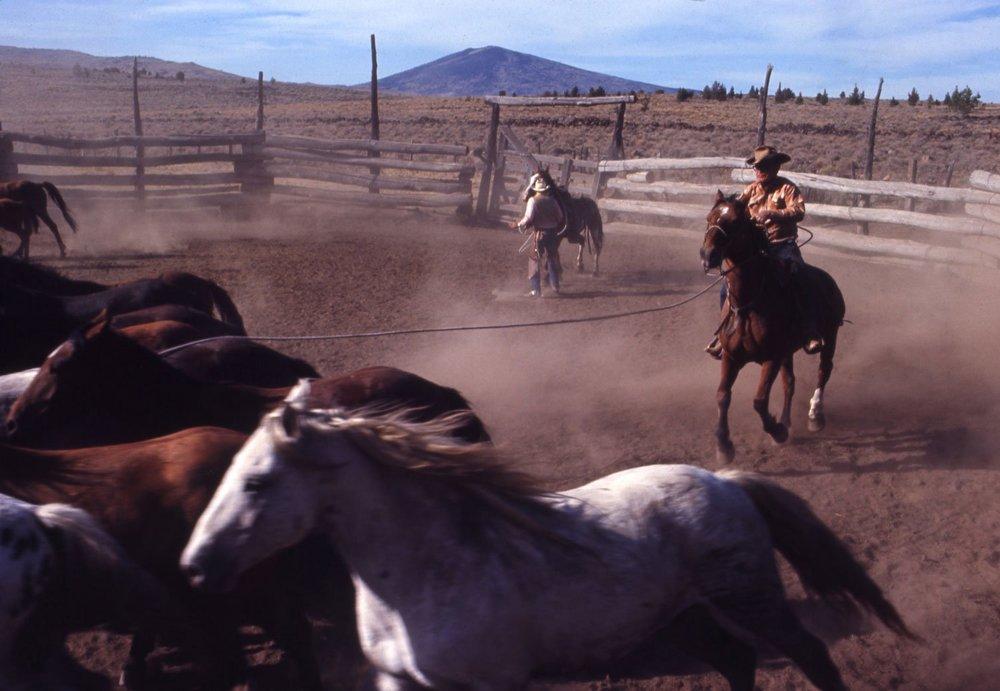 01_horses020.jpg