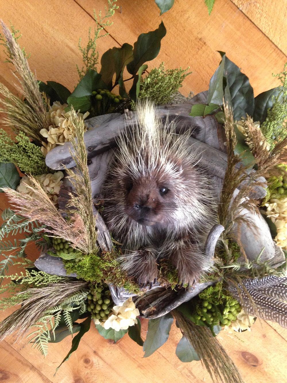 Porcupine Wreath