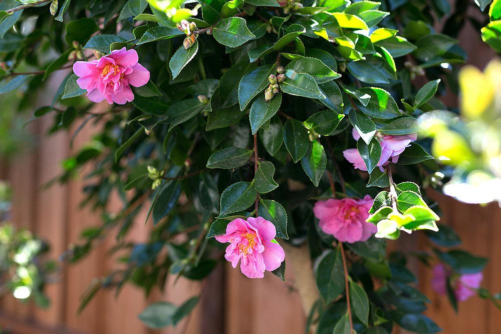 600 Everett_21 floral.jpg