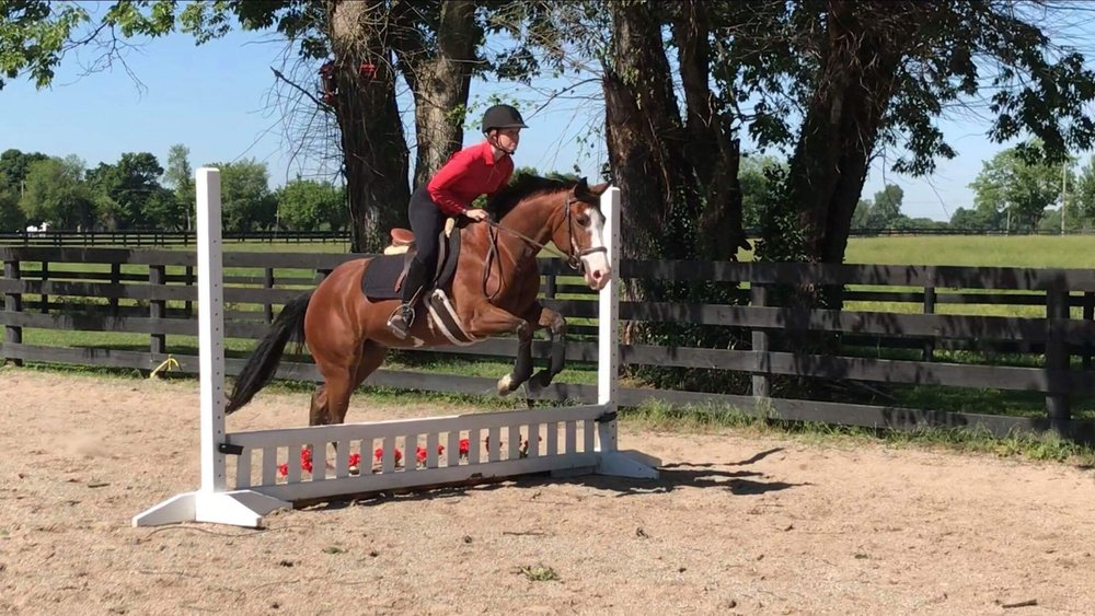Freya - 5 year old hunter pony. 14.1 hands and appropriate for a walk-trot rider through short stirrup. Freya is available for half lease. $300.00/month.