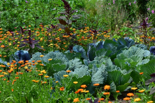 Cabbage Garden.jpg