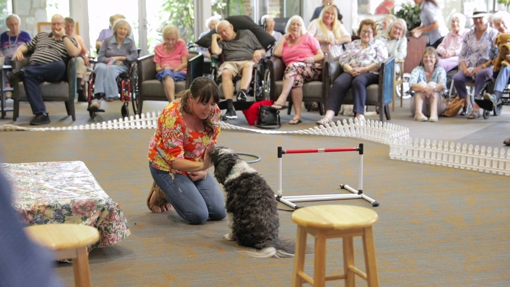 Opal by the Bay Dog Show Social Video