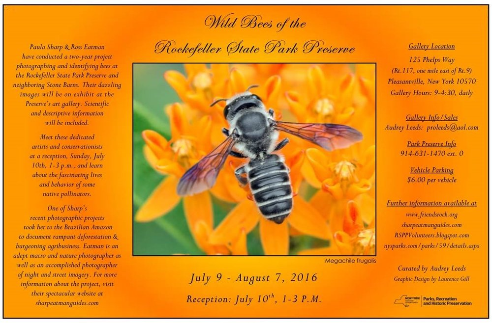 Wild Bees of the Rockefeller State Park Preserve