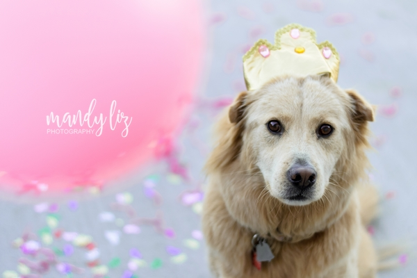 Nashville-pet-photographer-Dog-Birthday-Party  (2)