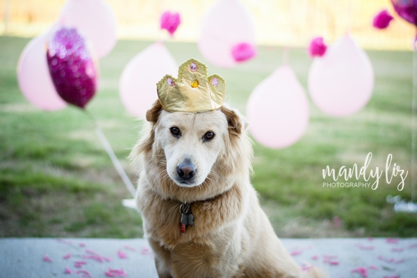 Nashville-pet-photographer-Dog-Birthday-Party  (1)