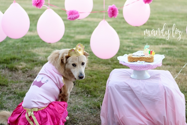Nashville-pet-photographer-Dog-Birthday-Party  (4)