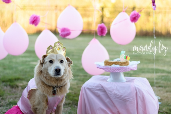 Nashville-pet-photographer-Dog-Birthday-Party  (6)