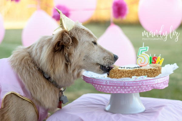 Nashville-pet-photographer-Dog-Birthday-Party  (7)