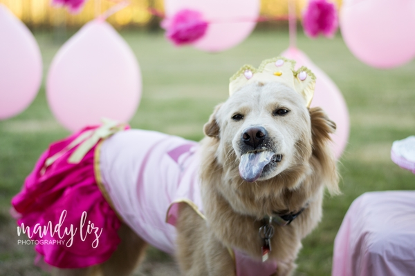 Nashville-pet-photographer-Dog-Birthday-Party  (8).jpg