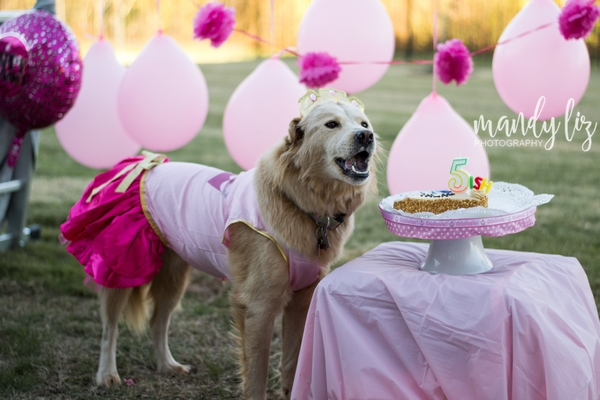 Nashville-pet-photographer-Dog-Birthday-Party  (9).jpg