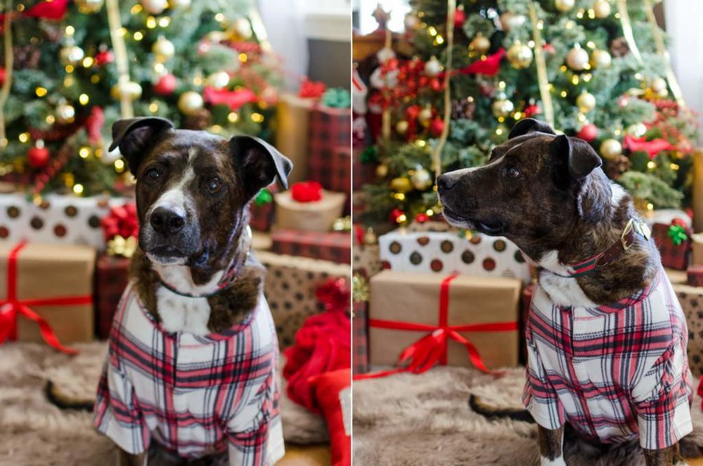 Couple-and-pet-In-Home-Christmas-Pictures-Nashville-Lifestyle-Photographer+17