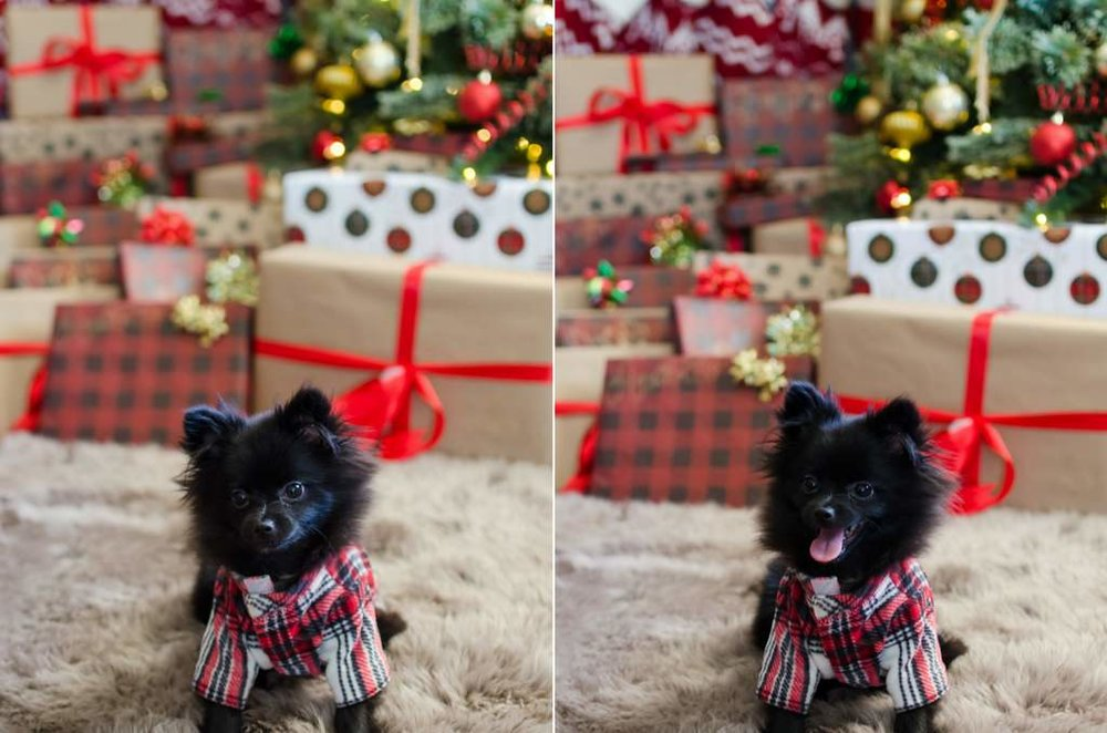 Couple-and-pet-In-Home-Christmas-Pictures-Nashville-Lifestyle-Photographer+18