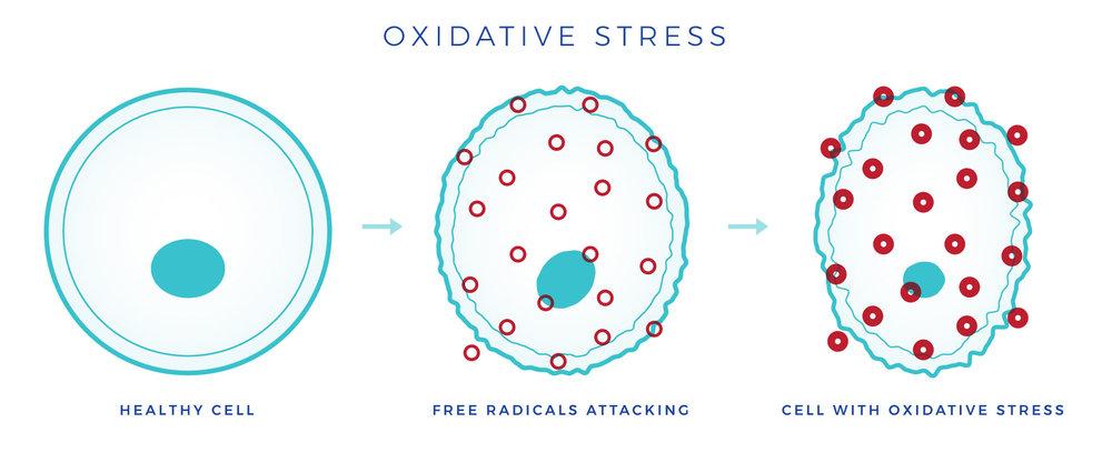 oxidative-stress.jpg