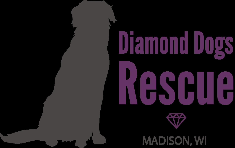 Adopting a Rescue Dog Madison Dane County Wisconsin
