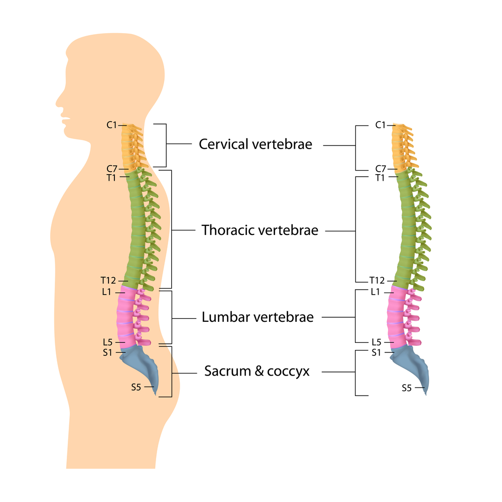 Image source: https://www.rugbyosteopaths.co.uk/conditions/spinal-pain/