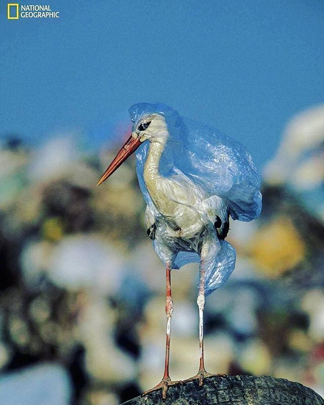 If this image doesn't shock you we don't know what will. National Geographic have covered a massive campaign on the plastic waste suffocating our world. Check out #planetorplastic and follow their story.  We cannot turn a blind eye any longer! 💙 #savewater #drinkair #noplastic . . #water #air #waterfromair #zerowaste #plastic #reuse #recycle #reduce #ourworld #ourocean #ourwildlife #change #makethechange #blindeye #niave #animals #bird #suffocation #nationalgeographic #planet #noplasticbottles