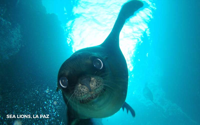 - La PazSwim with Whale SharksParaglidingSnorkelingVisit Sea Lion Colony/Isla Espiritu Santo