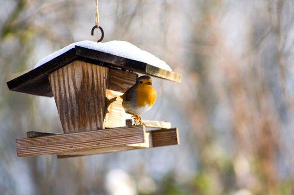 Wildlife-in-your-garden-in-winter-231410.jpg