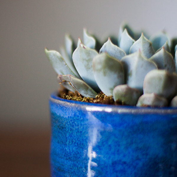 succulents1.jpg