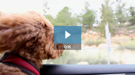 4. If you run an animal rescue organization, video is an awesome way to connect with potential volunteers or new pet families. Help your pups and kittens find their forever home with this cute 16-second template.