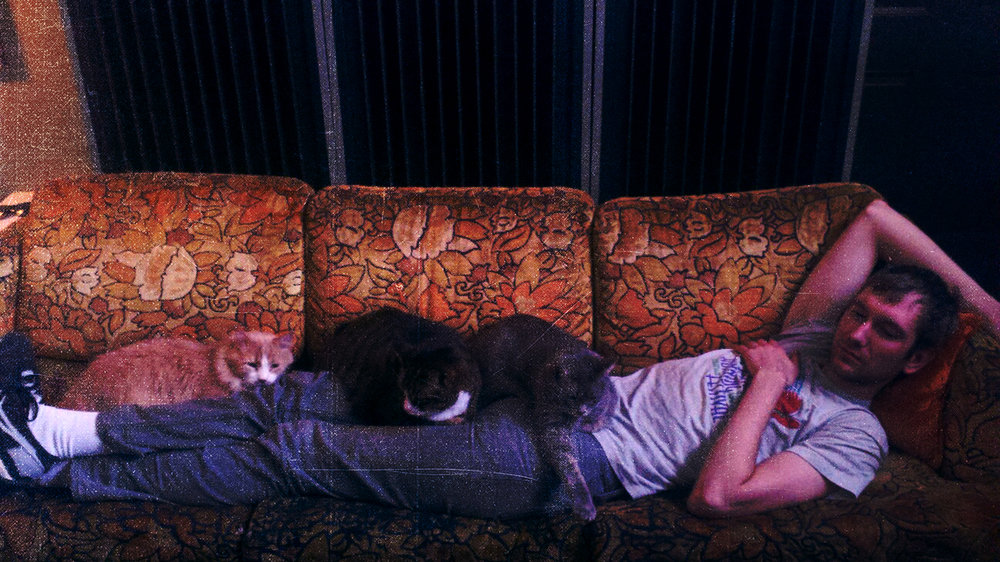 dave segedy couch cats.jpg