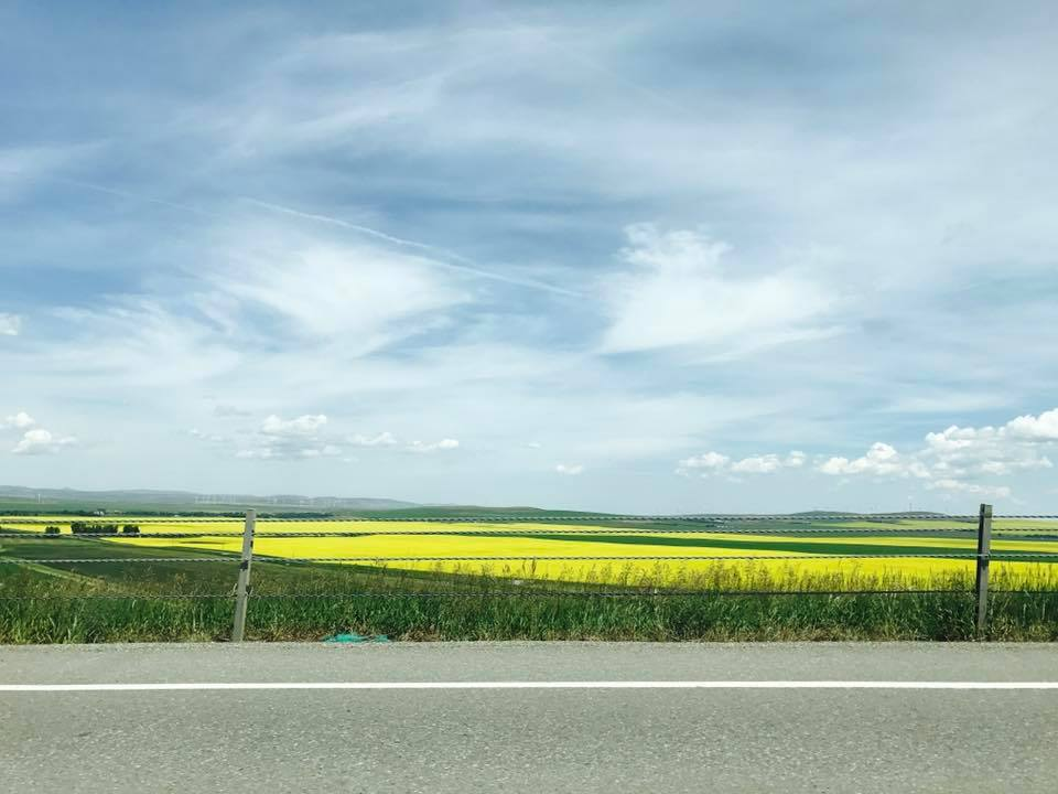 One of the coolest things about the trip between St. Mary and Calgary is the bright yellow fields of canola.