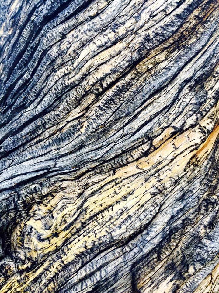 Close up of bark from a lava cast forest tree.