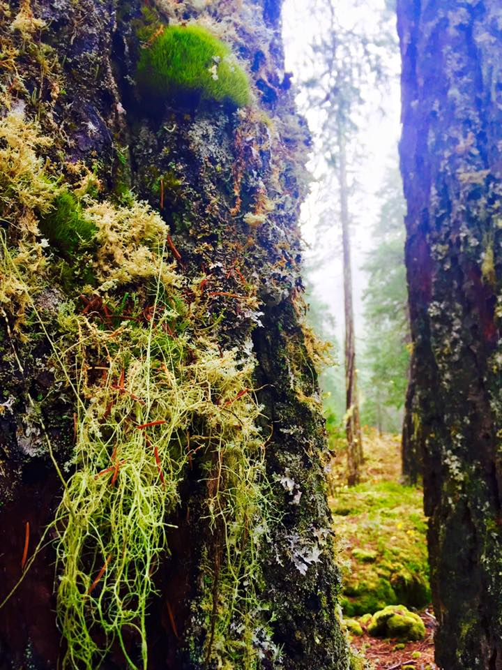 Love me some lichens!