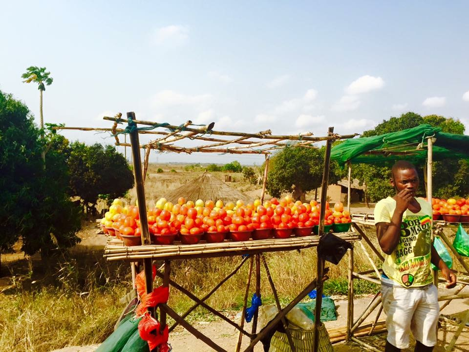 Tomatoes are a staple in Mozambican cuisine