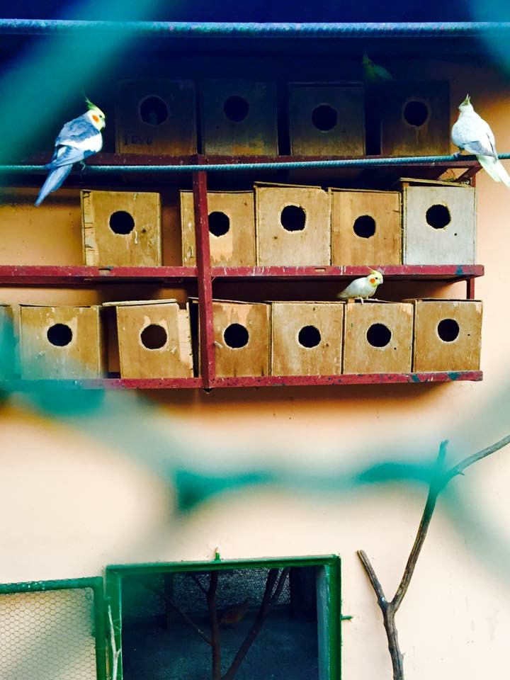 Birdies near the park.
