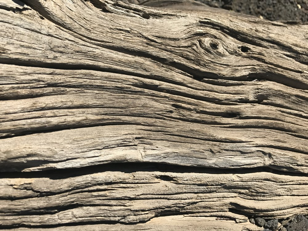 Trees in lava forests have very shallow roots and as a result their wood is very twisted.