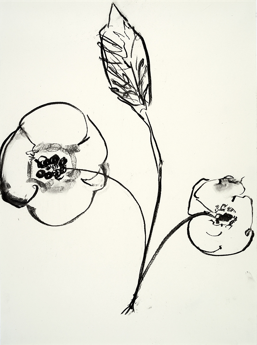 Poppies  2018 charcoal on paper 24 x 18 in.