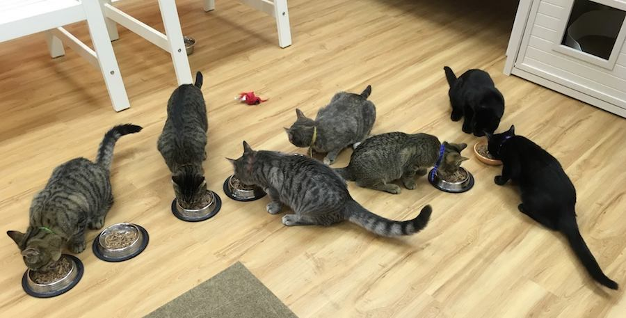 The cats fuel up before a day of being watched, petted, and cooed at. Mew Haven Photo.