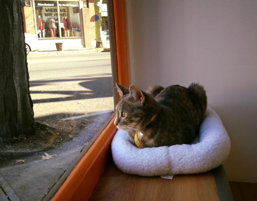 Sandy, one of Mew Haven's first beta testers, gets cozy. Mew Haven Photo.