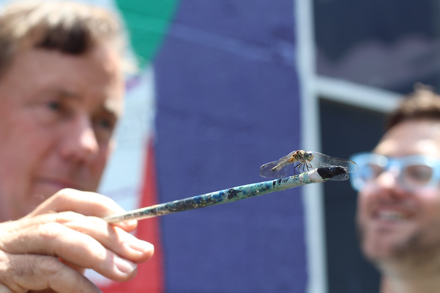 Are dragonflies drawn to Lamont?